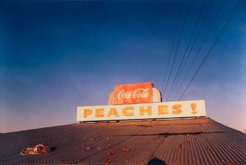 1_kurs_william_eggleston_Peaches